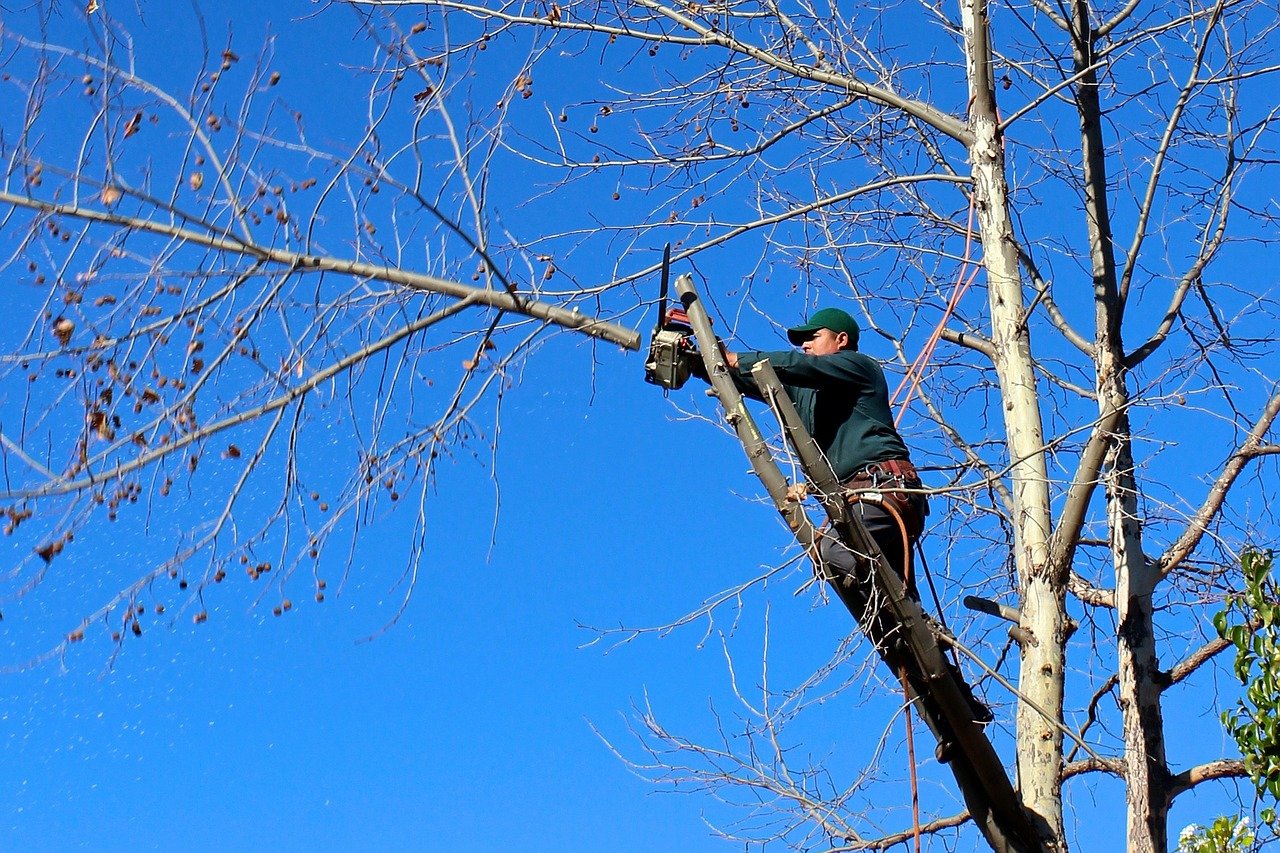 There are many Popular Tree Trimming Techniques